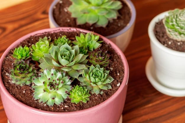 succulent soil recipe