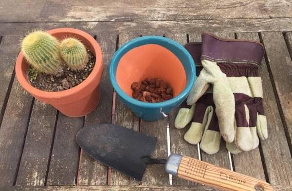 transplanting cactuses