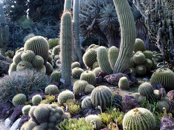 where do cactuses grow