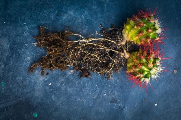 cactus parts