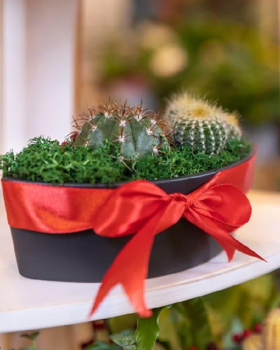 gifting cactus