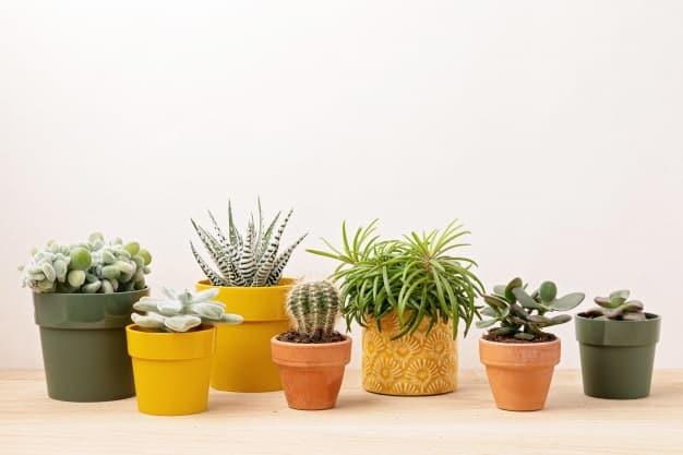 succulent plants for feng shui
