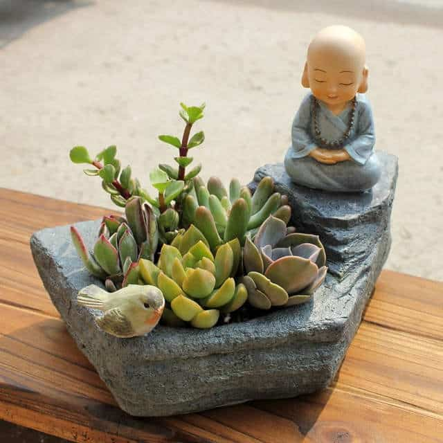 succulents feng shui