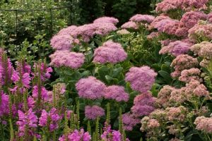 10 Tall Sedum Varieties for a Fascinating Garden