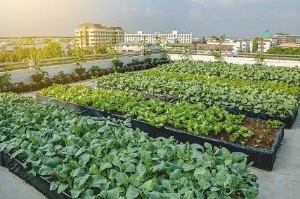 5 Tips For Starting Your New Garden In 2021
