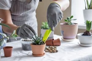 Best Way to Plant Succulents – Instructions and Tips