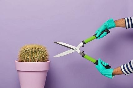 Can You Trim a Cactus?