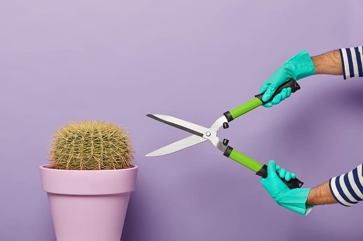 can you trim a cactus