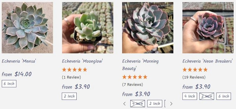 13 Best Places to Buy Succulents Online [2021 Buying Guide] 2