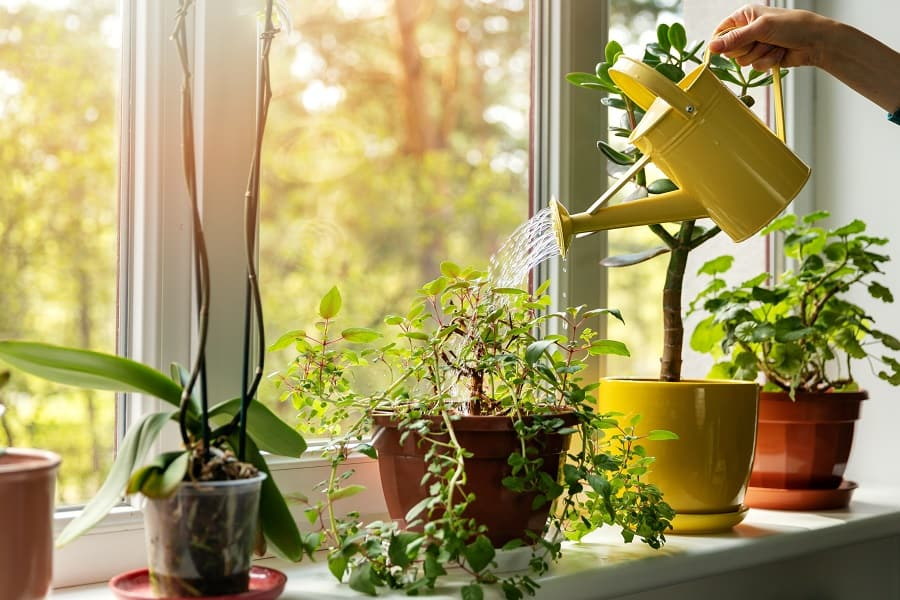 How Buying Plants Can Bring A Fresh Feel To Your Home 2