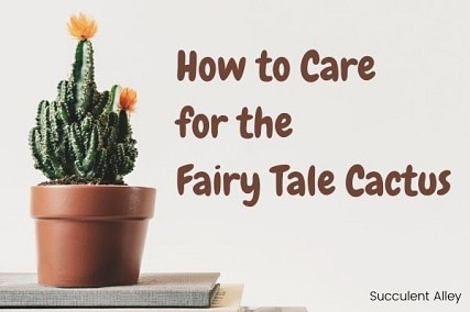 Fairy Castle Cactus – How to Care for this Breathtaking Plant