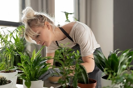 3 Tips For Choosing Plants For Your Grow Room