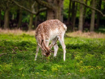 Do Deer Eat Succulents: 4 Interesting Facts to Know