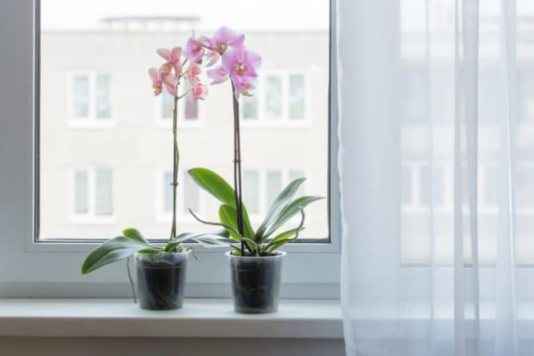 Are Orchids Succulents? 5 Interesting Similarities and Differences