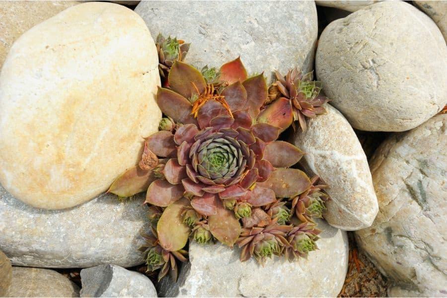 jardines con suculentas y piedras