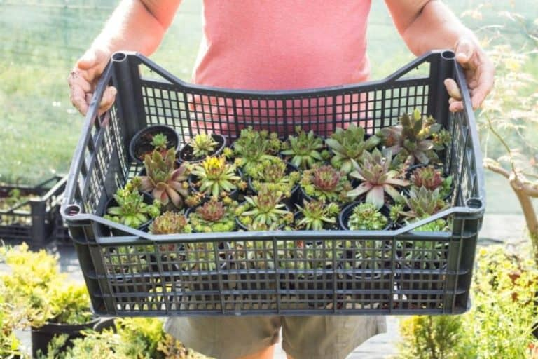 How to Ship Succulents Safely and Securely
