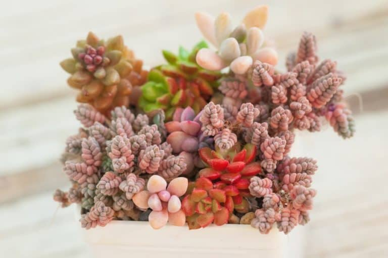 30 Exotic Succulent Plants and Where You Can Get Them