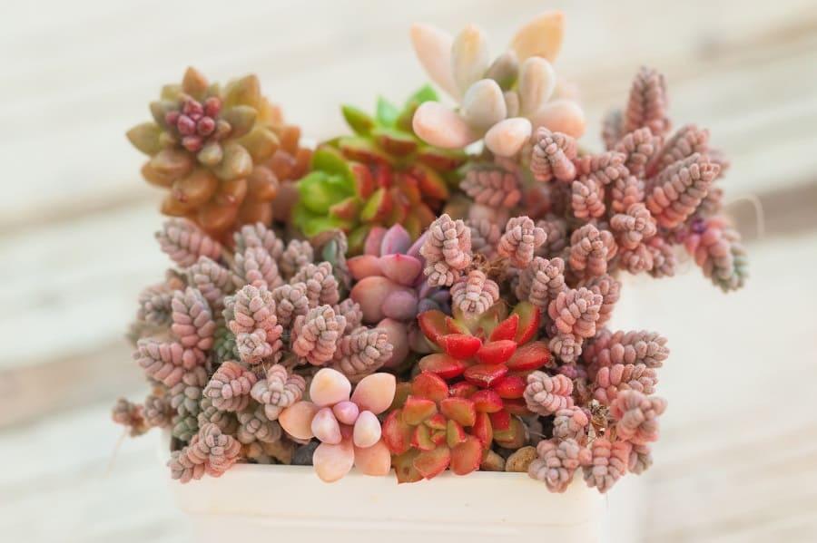 exotic succulent plants