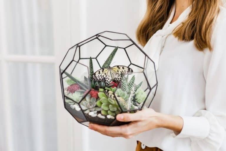 How to Care for Succulent Terrarium