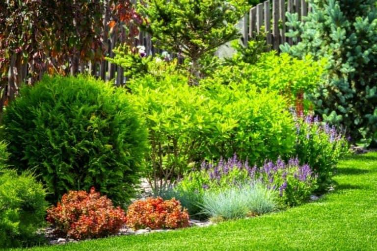 7 Ways To Increase Biodiversity In Your Garden