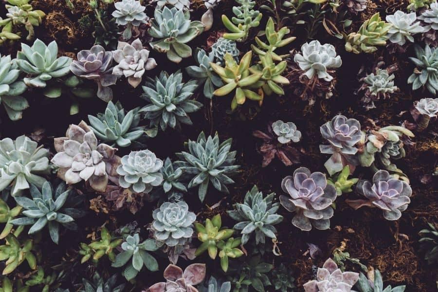 succulent wall gardens
