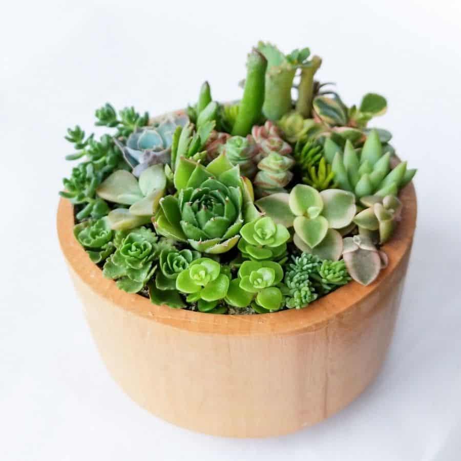 wooden succulent bowl ideas