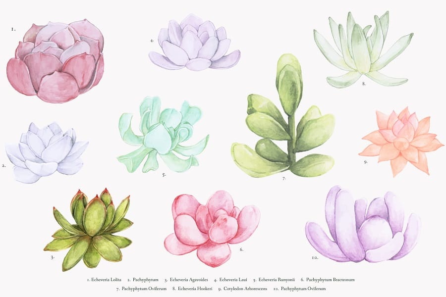 how to draw a succulent