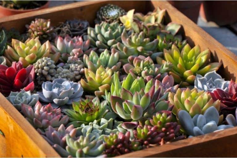 8 Easy Steps How to Make an Indoor Succulent Garden