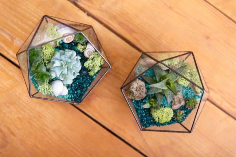 How to Plant Succulents in Glass Containers [Pictures and Guides]