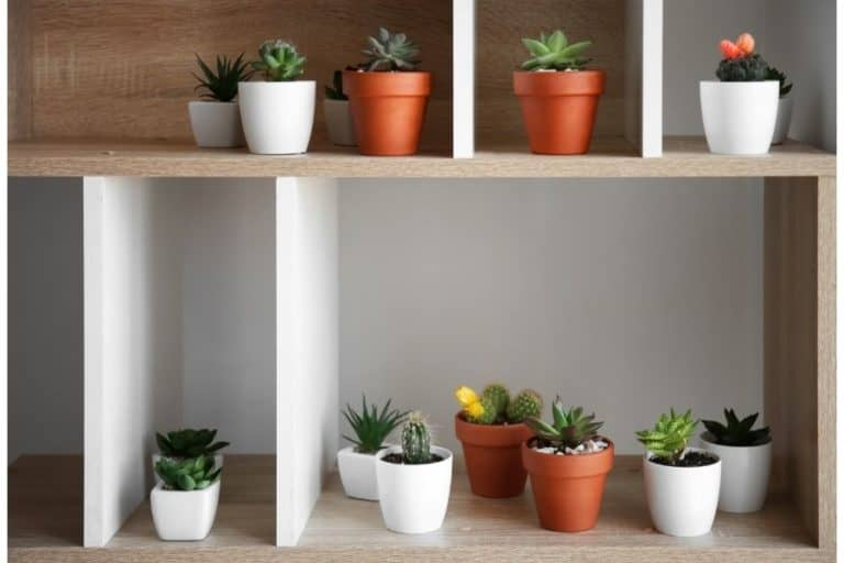 6 Ways How to Take Care of a Succulent Indoors