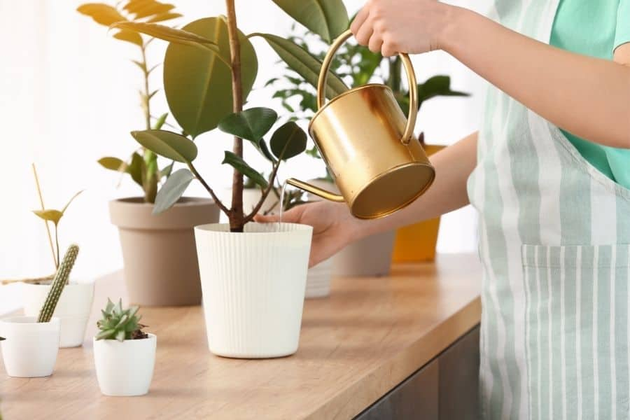 never use soft water on plants