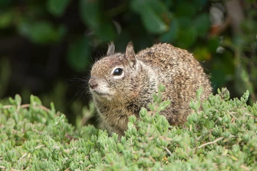 prevent squirrels from your succulent garden
