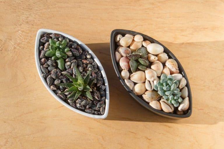 30 Cutest Indoor Succulent Garden Ideas