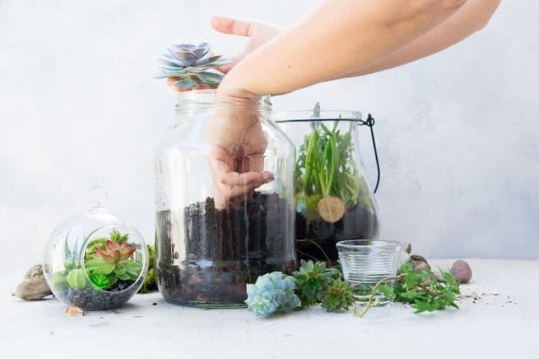 30 Creative Succulent Decorating Ideas