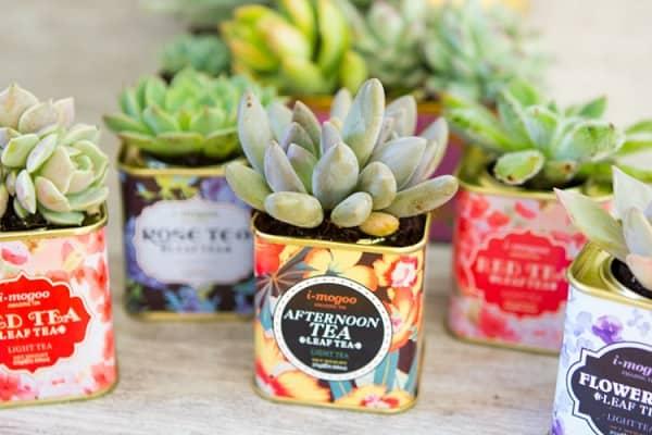 indoor succulent garden ideas