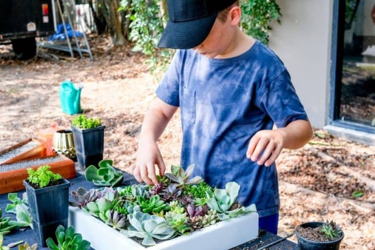 4 Reasons Why Kids Should Focus On Succulent Gardening